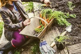 Tips And Tricks For Fall Gardening  WNPR NewsFall Gardening