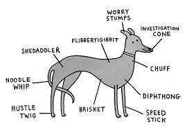 Breed Specific Canine Anatomy Greyhound Rescue Grey Hound