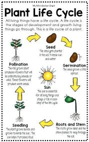 My Mini Anchor Chart Plant Life Cycle Anchor Chart 2nd Grade Www