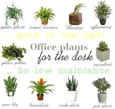 small office plant. Small Office Desk Plants Best Ideas On For Low Light And Your Indoor Plant G