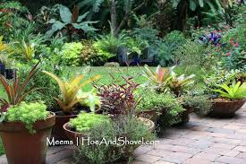 low maintenance plants for central florida easy maintenance low bowl containers low maintenance landscape plants for central florida best low maintenance