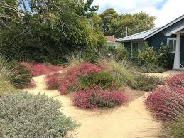 california native plants for the garden. Landscape Design With Native Plants Plant Garden Dubious And Maintenance Of Gardens 1 Martin . California For The ,