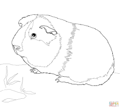 Small Picture Guinea pig coloring pages Free Coloring Pages