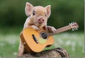 """Résultat de recherche d'images pour """"singe avec cochon"""""""