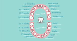When Do Babies Get Teeth Chart Baby Teething Chart What Order Do They Come In Mama Natural