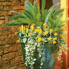 container for spring and