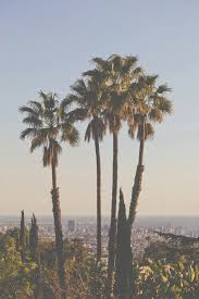 palm trees tumblr vintage. Cool, Fashion, Hipster, Hollywood, Palm Trees, Photography, Tumblr, Us Trees Tumblr Vintage R
