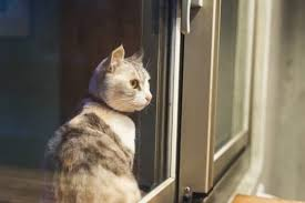 Why Do <b>Cats Look Out</b> the Window at Night? — Senior <b>Cat</b> Wellness