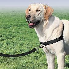 Petsafe Front Attachment Lead Dog Walk Harness