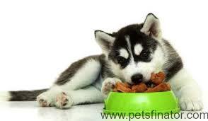 A Guide To Kirkland Dog Food