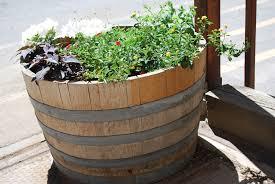 wooden barrels for garden planters inspiring oak barrel planters oak barrel planters used