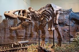 Trex Span Chart Tyrannosaurus Wikipedia