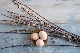 Jaja Wielkanocne I Wierzba Pizdzista Zdjęcie Stock - Obraz złożonej z  pizdzista, jaja: 172459024