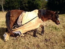 horse blanket rack rip horse blankets 7 more that survive winter horse trailer swing out blanket