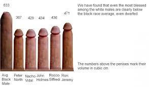 Average porn stars penis size
