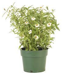 how to make plastic flower pots look vintage