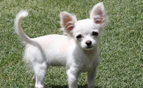 Perth's cutest pets | The West Australian