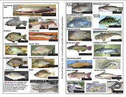 Florida Freshwater Fishing Regulations Chart New Page 1