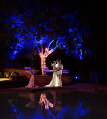 lighting outdoor trees. outdoor colored tree uplighting lighting trees