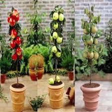 56 Best Fruit Trees  Dwarf Images On Pinterest  Growing Fruit Dwarf Fruit Trees Virginia