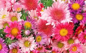 flowers hd images free hd wallpaper 3d hd desktop picture free stock
