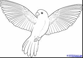Bird Coloring Page Nothern Cardinal Bird Coloring Page Free