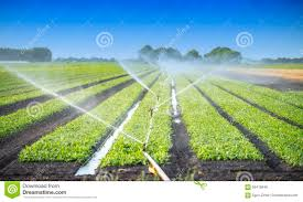Watering Crops Stock Photo Image Of Biological Farm 56476646
