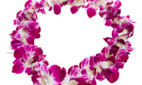 stunning hawaiiflowerlei hawaii flower lei groupon