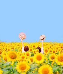 ひまわりの待ち受け壁紙10選おしゃれで夏らしい向日葵画像の効果は
