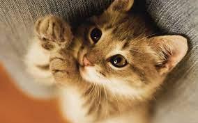 Небольшая подброка котов на Ваш рабочий стол / фото :: wallpaper :: котэ  (прикольные картинки с кошками) / смешные картинки и другие приколы:  комиксы, гиф анимация, видео, лучший интеллектуальный юмор.
