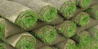 Image result for Turf sales and Irrigation