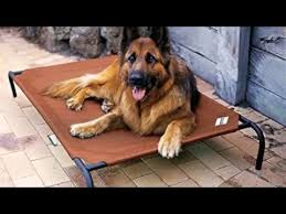 Coolaroo Elevated Pet Bed with Breathable Fabric