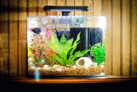 Fish Tank Accessories And Decorations interior Fish Tank Decor Ideas Small Decoration Decorations 63