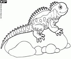 Small Picture Desert Lizard Coloring PagesLizardPrintable Coloring Pages Free