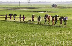 brief essay on land reforms in 4228 words