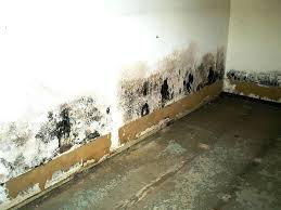 how to remove mold from inside walls how to get rid of mold inside walls how