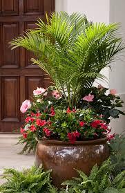 Tropical Plants Affordable Backyard Pool Ideas  2274 Plant Ideas For Backyard