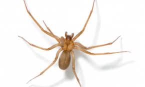 Spiders Wilderness Poisonous Identify How not Venomous To TwAqxSg