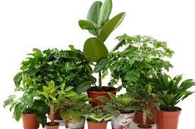 favorite low light houseplants