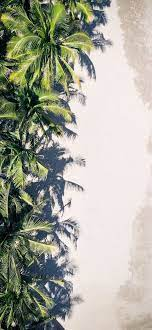 coconut palm trees iPhone 12 Wallpapers ...