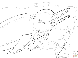 Small Picture Coloring Pages Animals Big Dolphin Coloring Page Dolphin