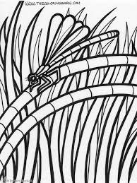 Layers Of Rainforest Coloring Page Rainforest Habitat Coloring