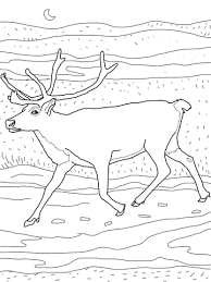 Small Picture Caribou coloring page Free Printable Coloring Pages