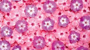 free pink flower wallpaper 1080p long wallpapers