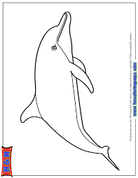 Small Picture Cute Dolphin Coloring Pages chuckbuttcom