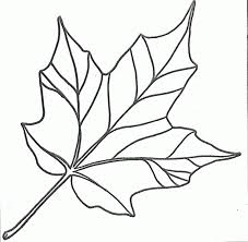 drawn maple leaf traceable 3