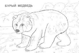 Small Picture Wild Animals Coloring Pages GetColoringPagescom