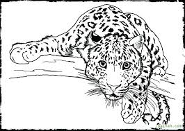 Rainforest Animals Coloring Pages Fashionadvisorinfo