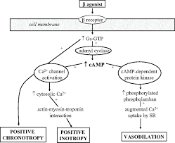 Inotropes And Vasopressors Circulation