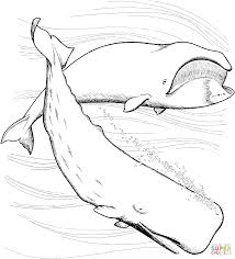 Small Picture Sperm Whale coloring page Free Printable Coloring Pages